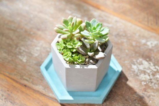 五種最適合當生日禮物的盆栽推薦 5
