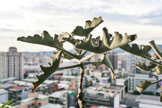 陽台造景夏季植物