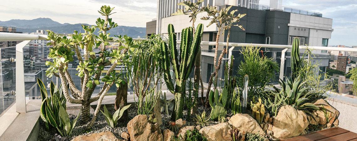 8 種「大樓陽台植物」推薦!新手也適合 41