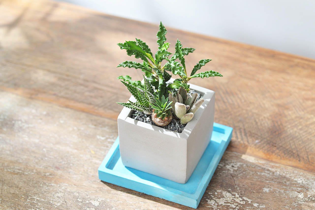 陽光下的桌上盆栽