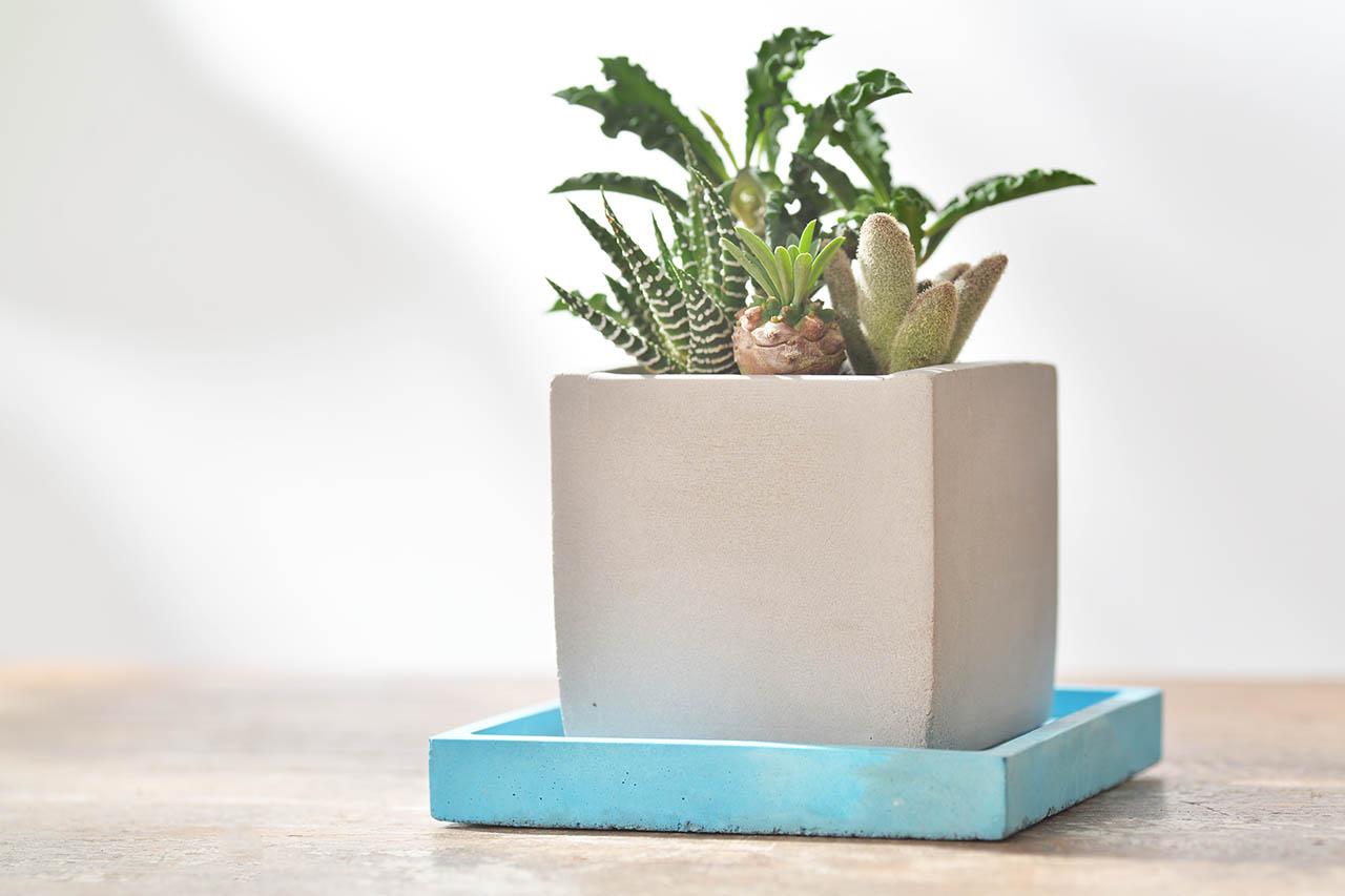 辦公桌水泥盆栽