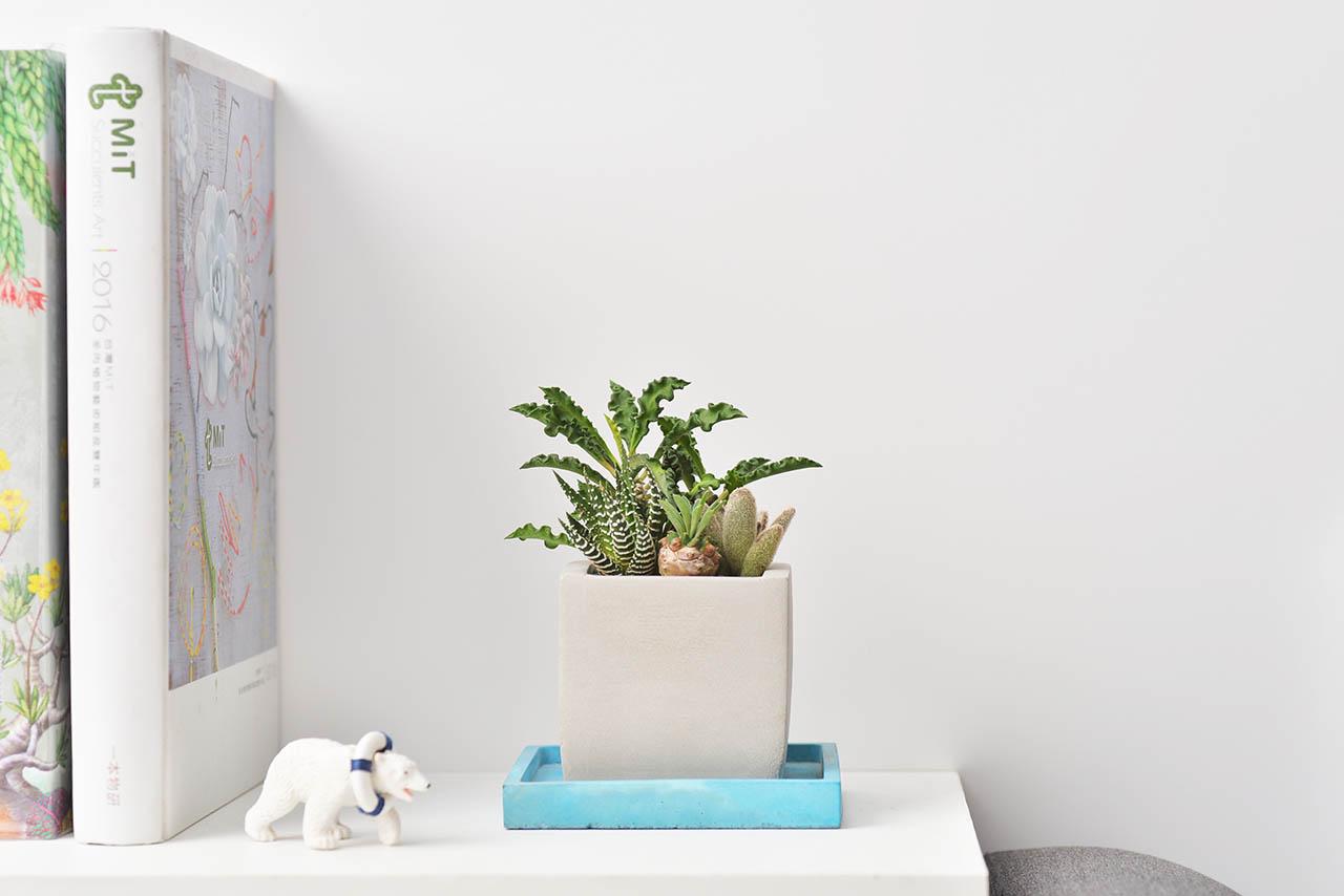 山型桌上型盆栽