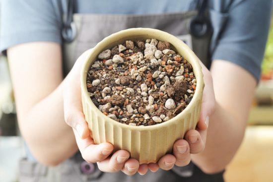 觀葉植物專用介質