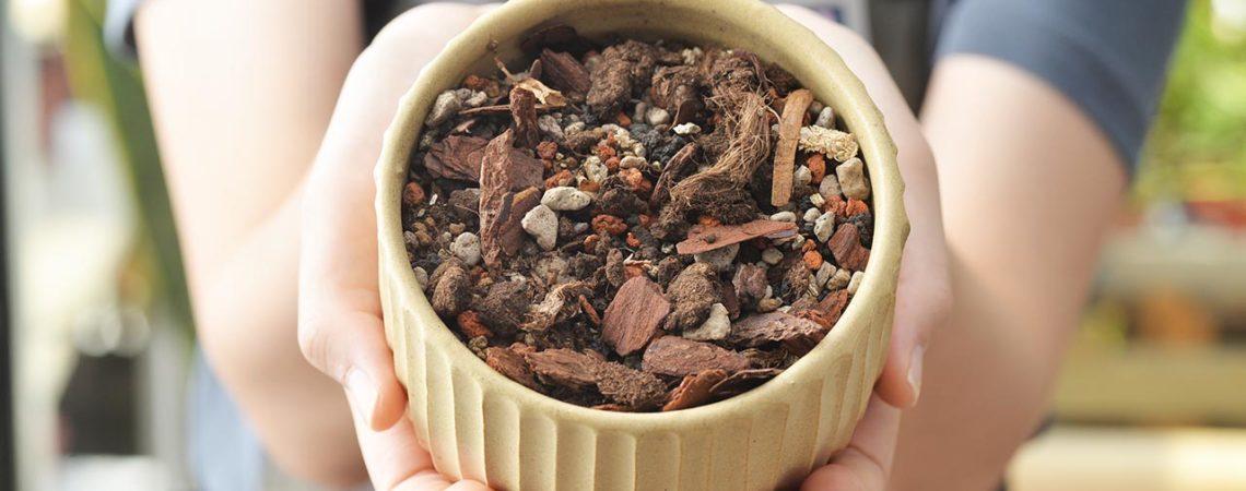 觀葉植物、室內植物專用介質介紹 053