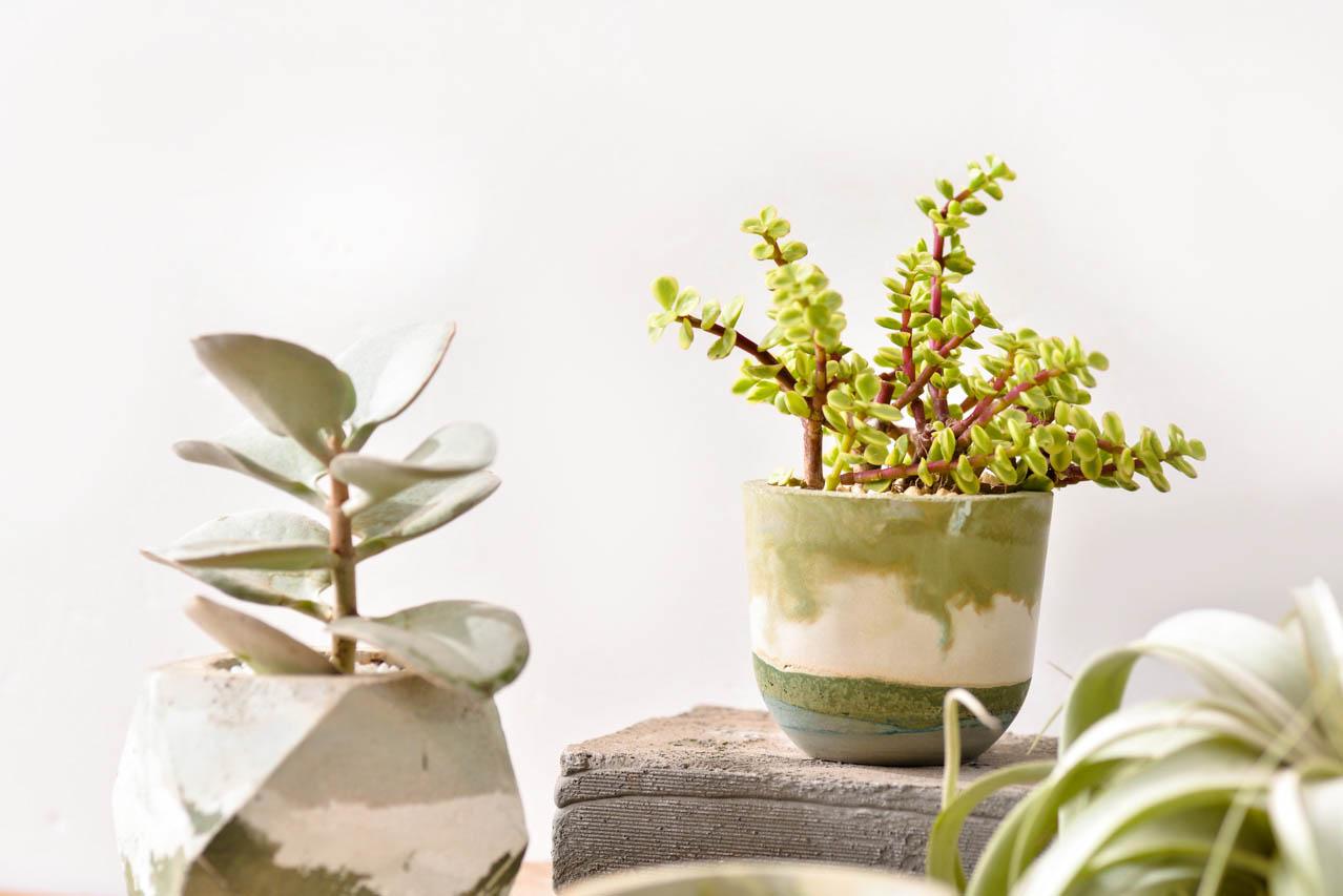 [ 水泥課程 ] 諧意繪泥 & 療癒植栽 2