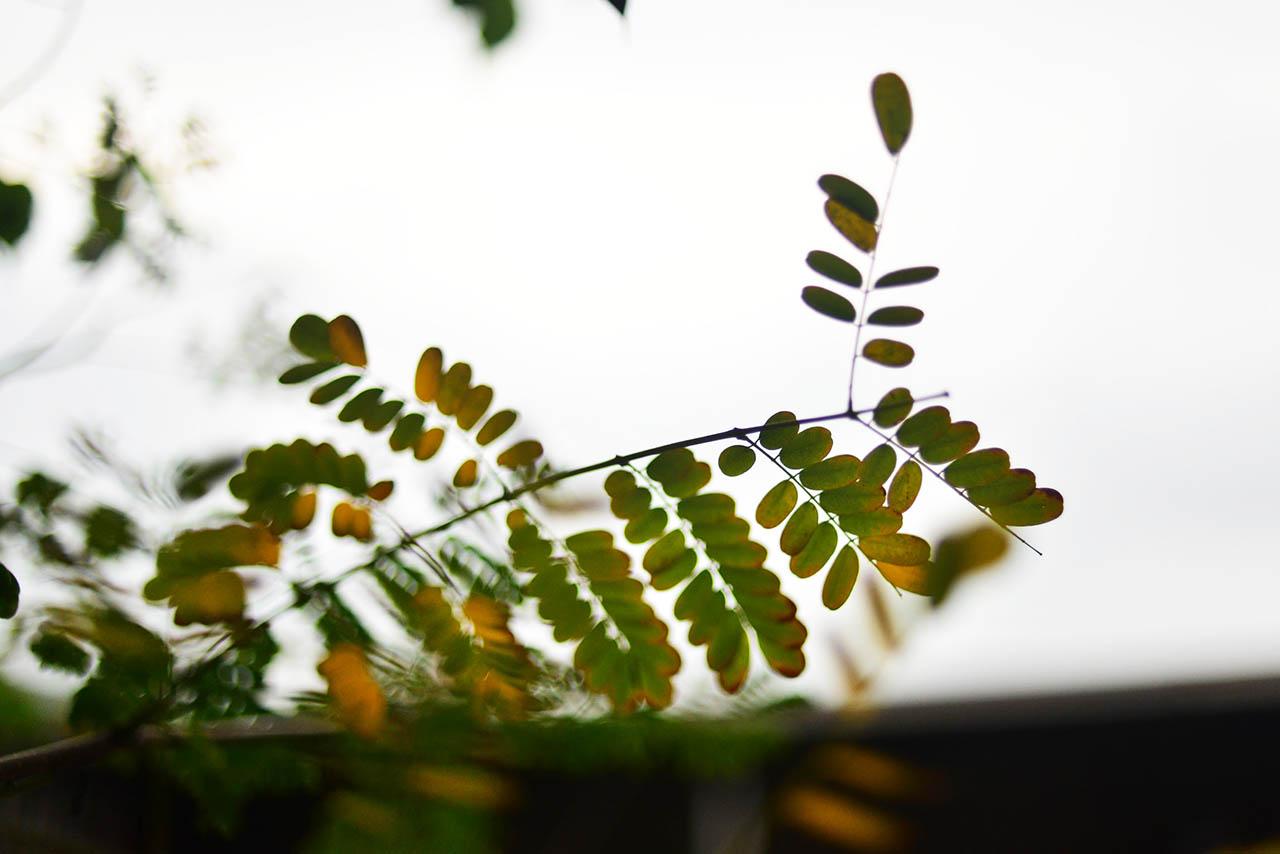 關於葉子的更多知識