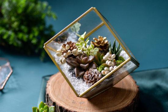 多肉珠寶盒盆栽