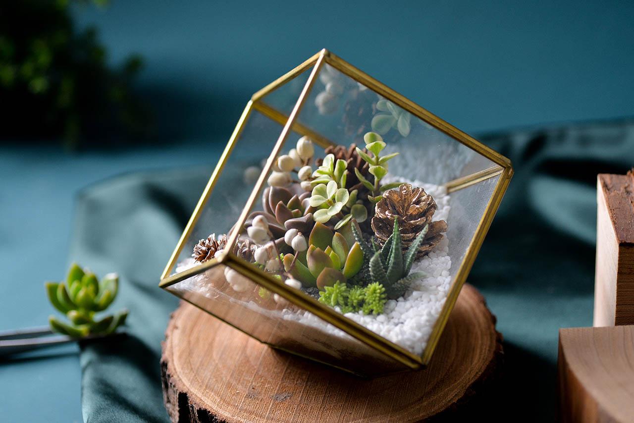 玻璃和多肉植物