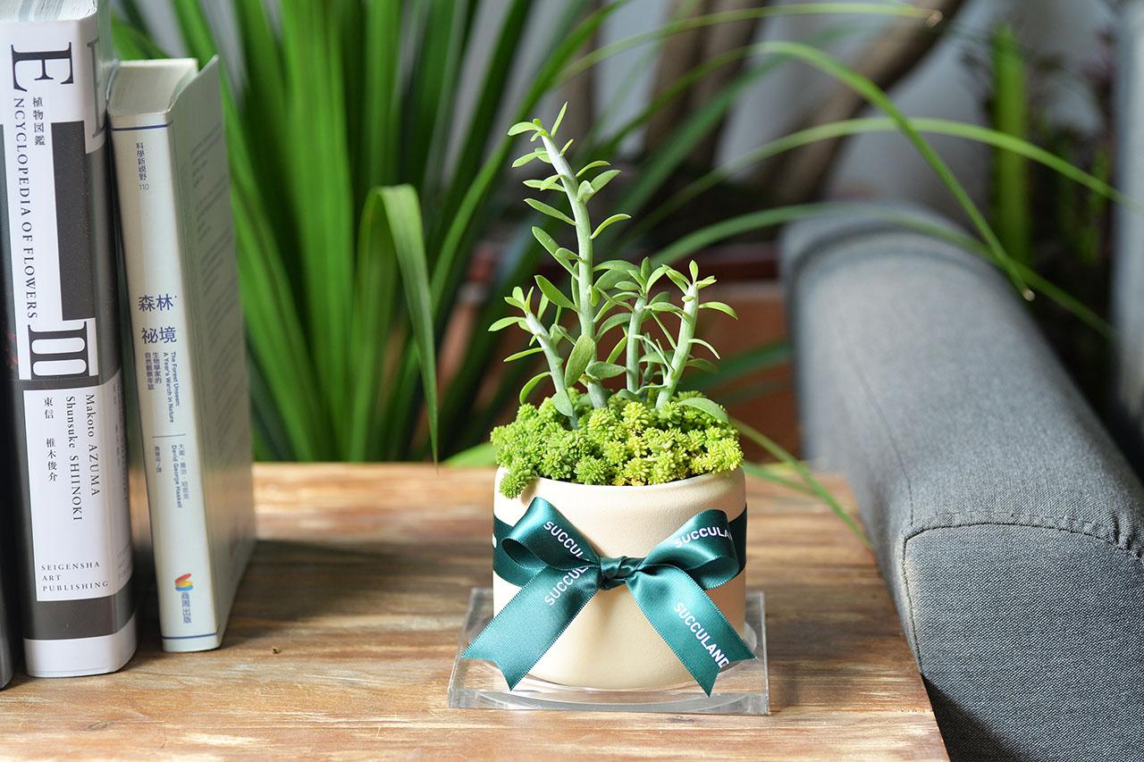 桌上型盆栽祝福