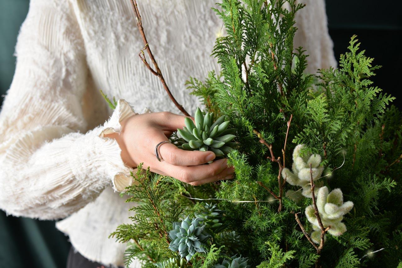 [ 聖誕活動 ] 野奢聖誕(多肉聖誕樹) 5 1 1