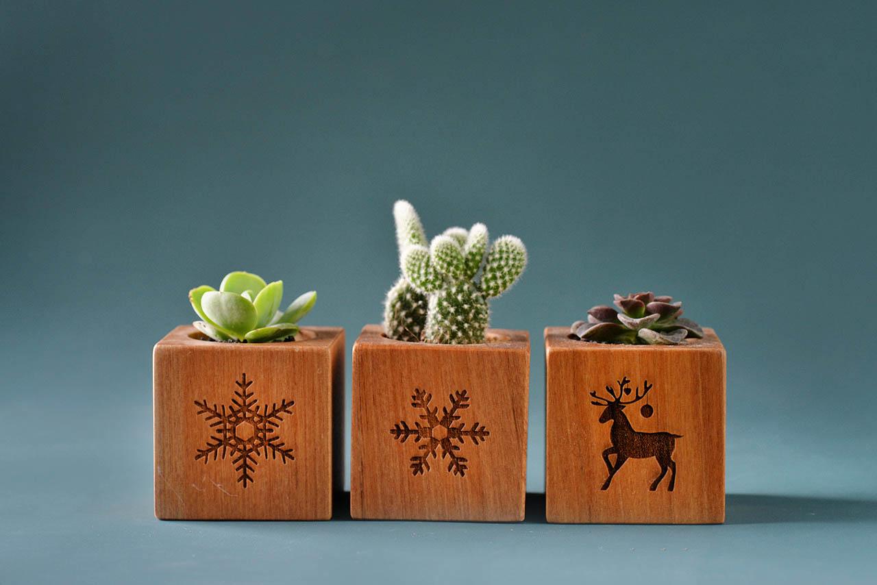 聖誕節交換禮物盆栽