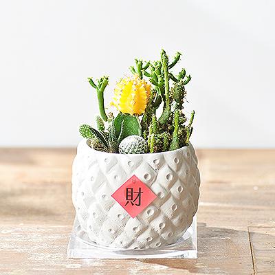 2021台北花店開幕盆栽新品上架1