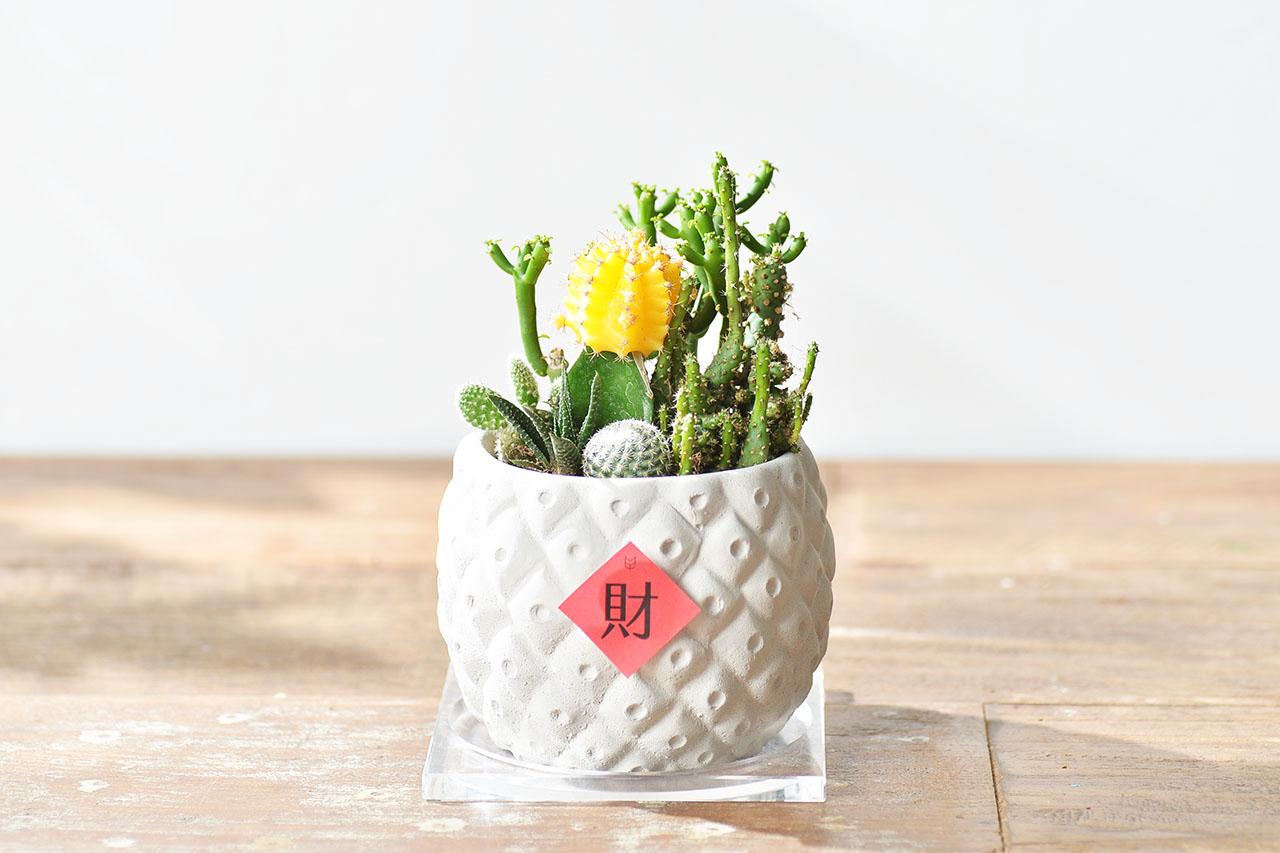 鳳梨造型盆栽送禮
