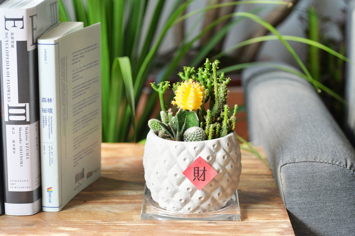 新店開張送什麼呢?桌上盆栽吧! 2021台北花店開幕盆栽新品上架7