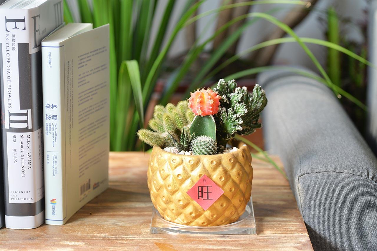 桌上型盆栽送禮