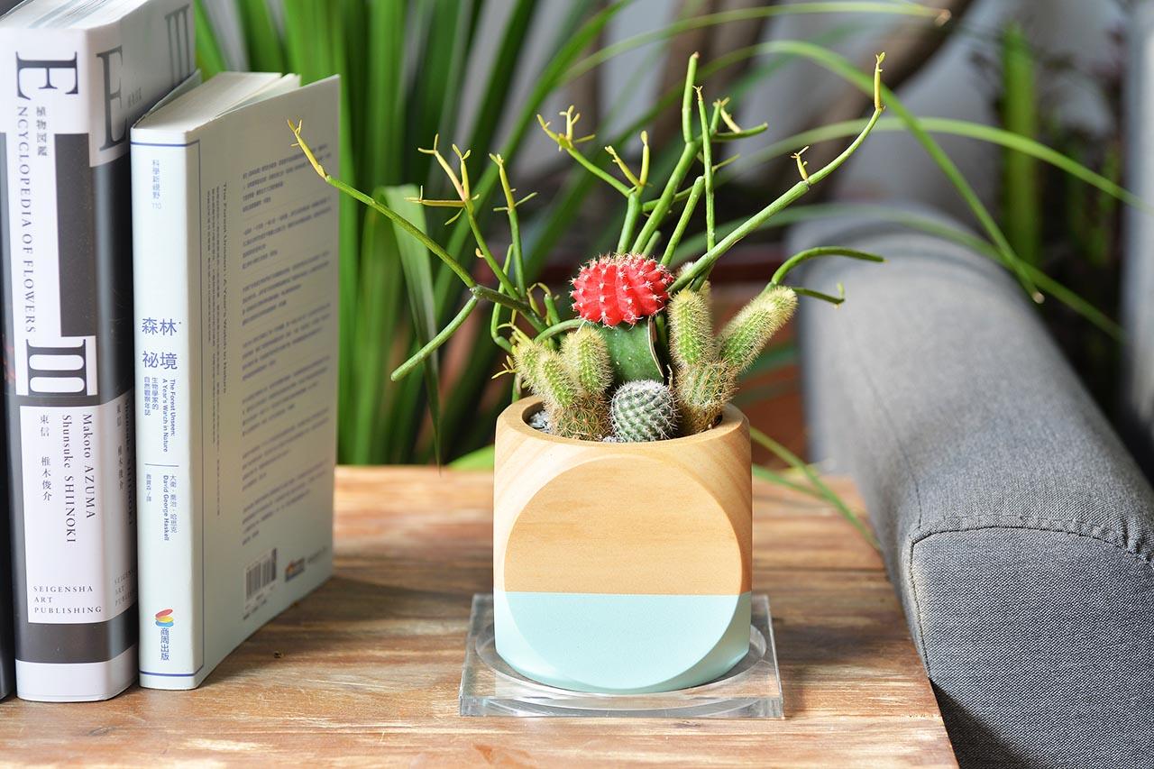 桌上型木製盆栽