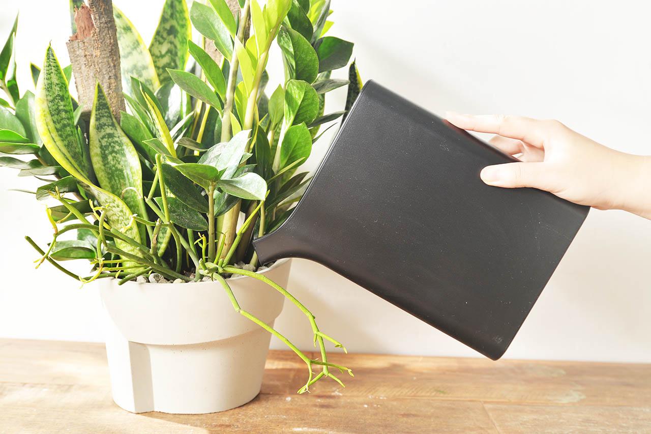 室內盆栽照顧澆水