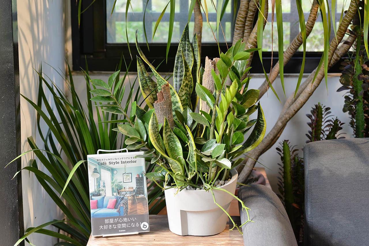 桌上型室內盆栽