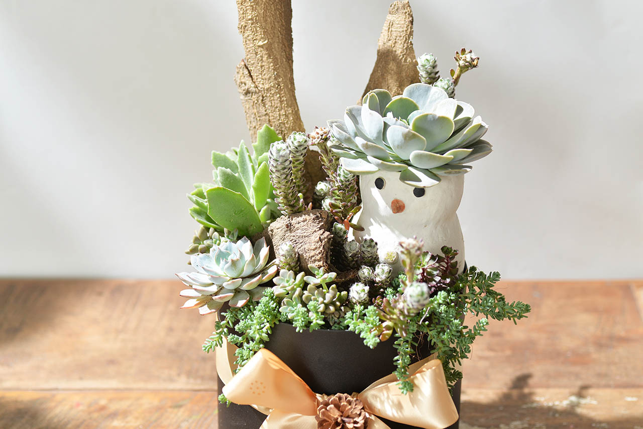 雪人花禮盆栽