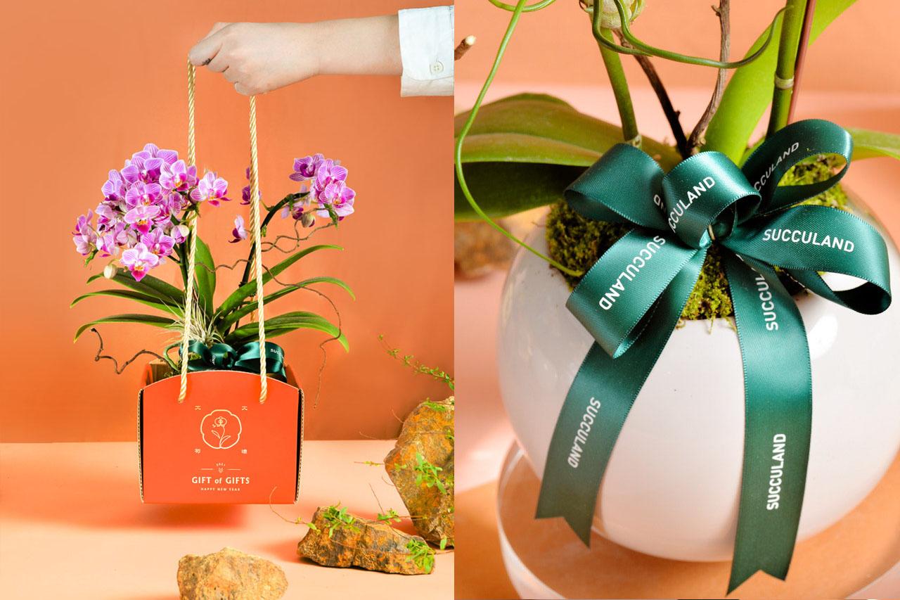 2021 年春節植物禮盒 2021有肉春節蘭花盆栽(拼)2