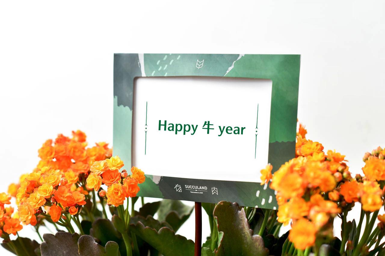 2021 牛年吉祥話、祝賀詞大集合(40句子+) Happy 牛 year