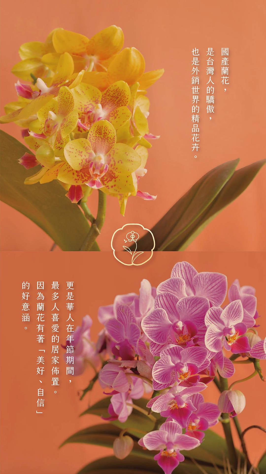 春節蘭花盆栽銷售