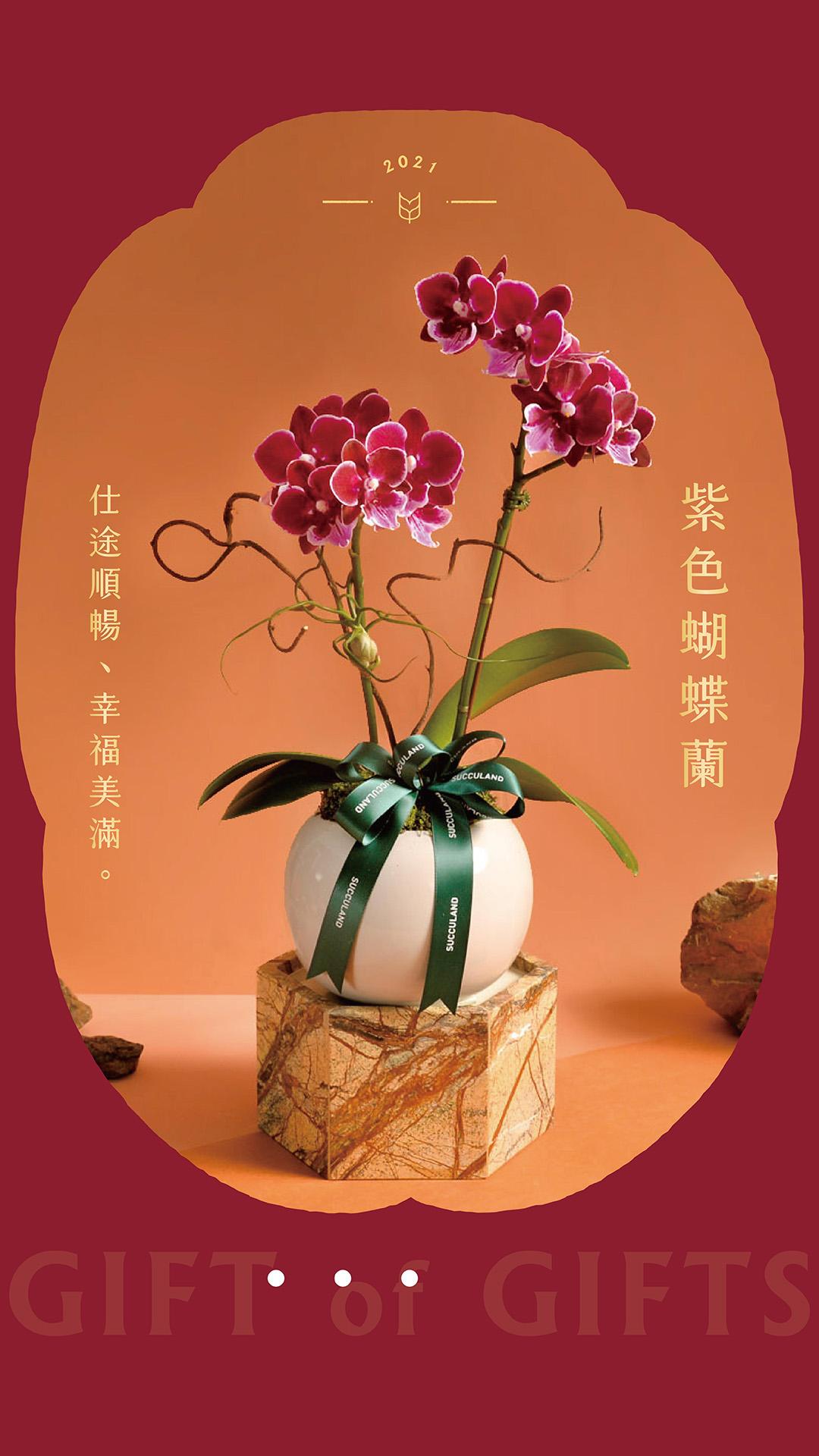 紫色蝴蝶蘭