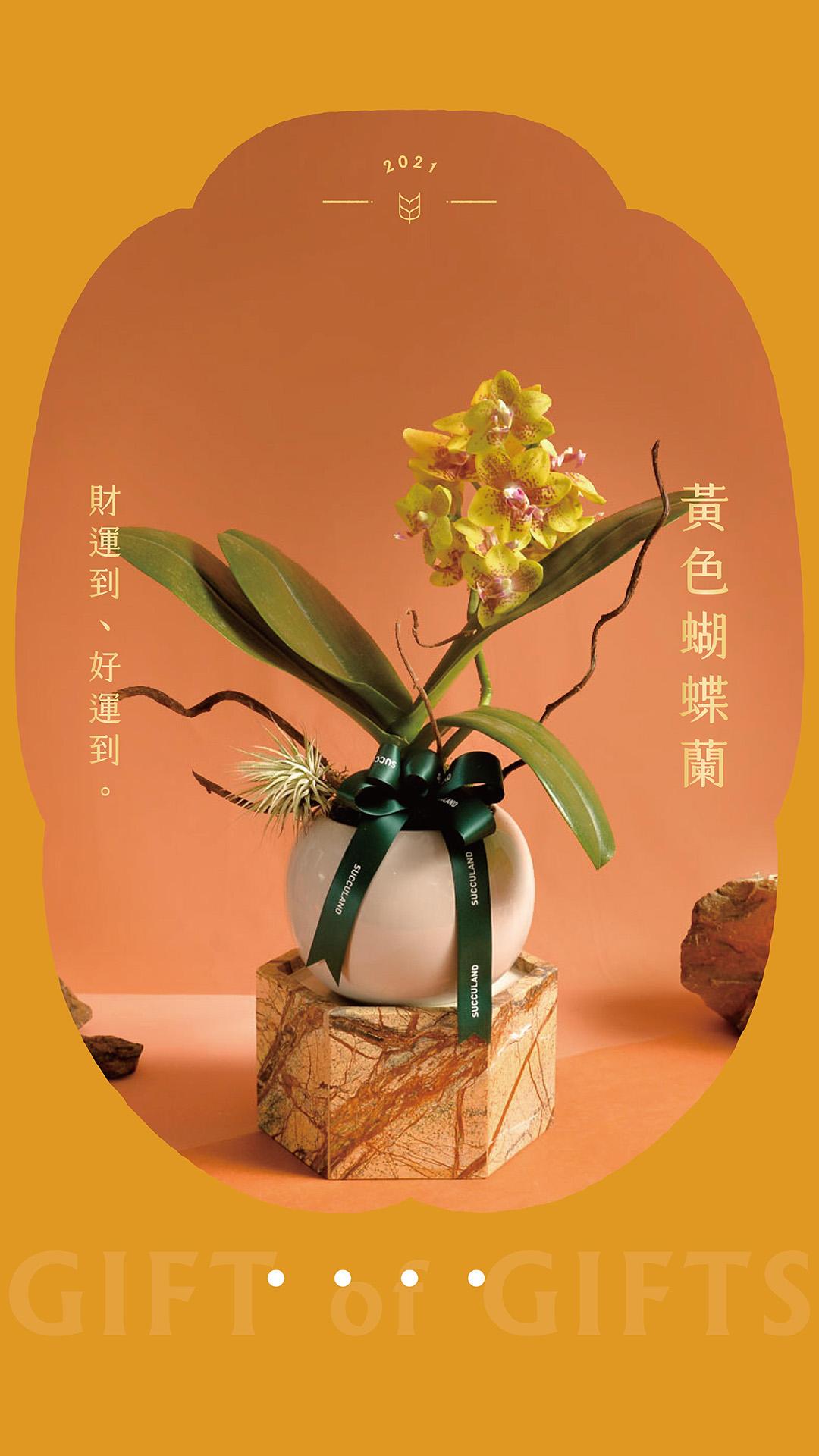 黃色蝴蝶蘭