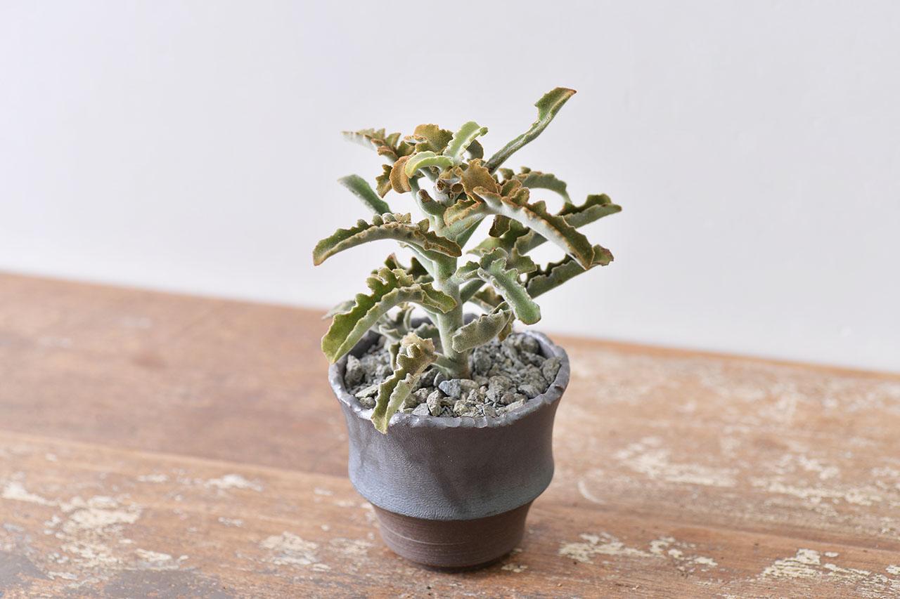 質感陶器盆栽