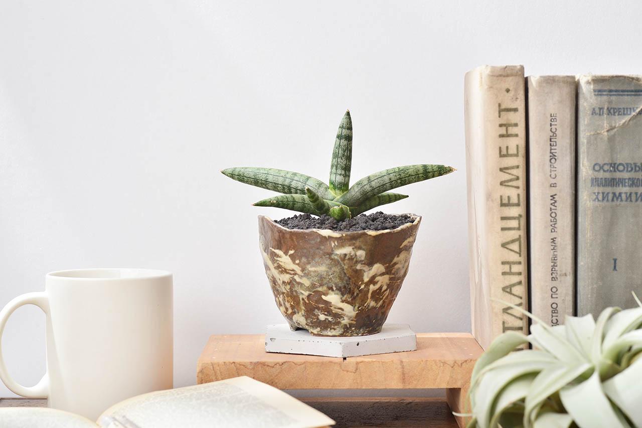 虎尾蘭桌上盆栽