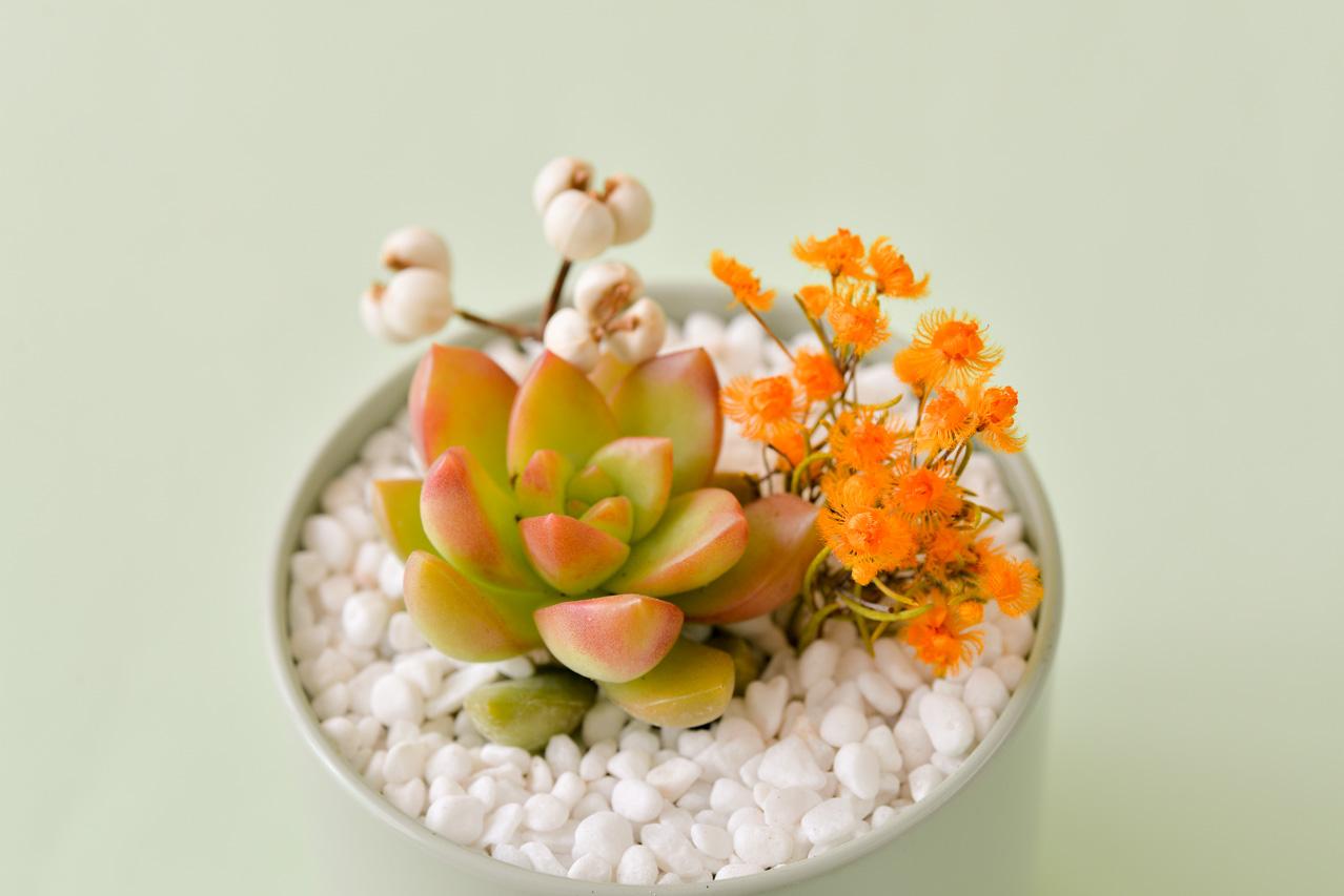 有肉 Succulent & Gift - 官方網站 2021母親節 79