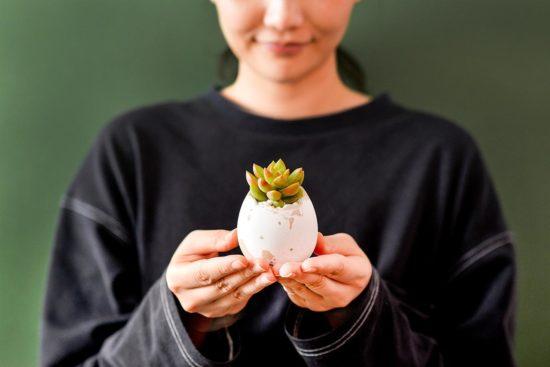 2021 蛋糕禮盒推薦,聯名植物雙重體驗 2021 有肉的端午節植物係禮盒_台灣設計製造15