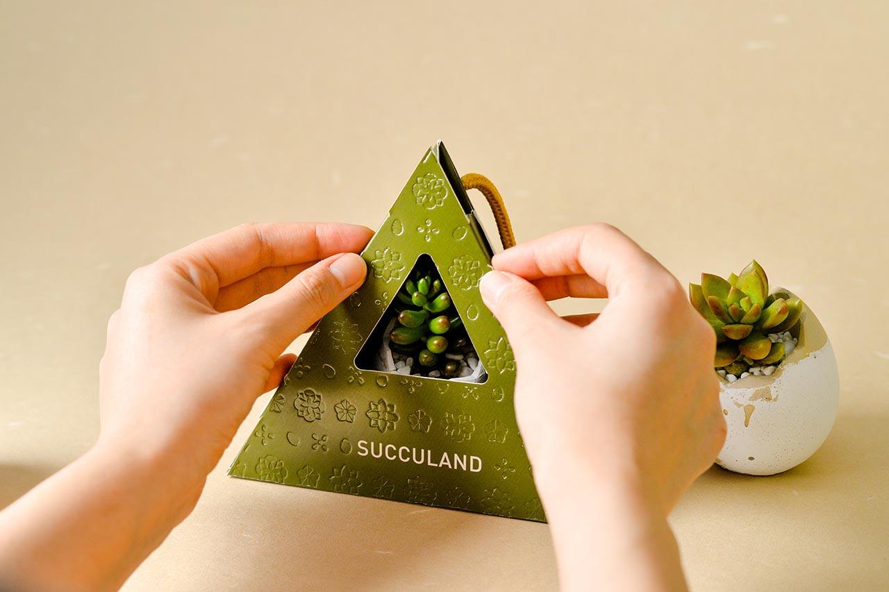 2021 端午禮盒 - 好運立蛋盆 2021 有肉的端午節植物係禮盒_台灣設計製造6