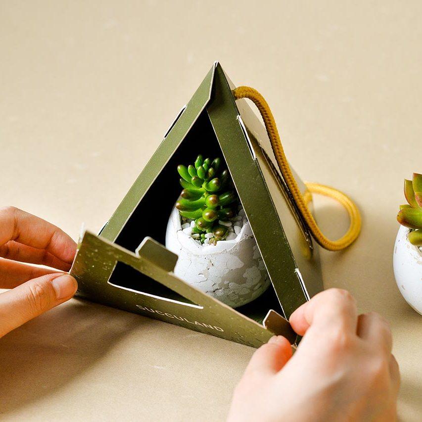 2021 有肉的端午節植物係禮盒_台灣設計製造7