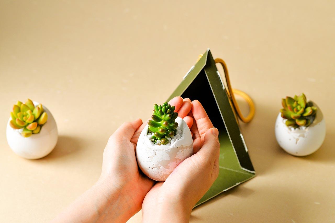2021 端午禮盒 - 好運立蛋盆 2021 有肉的端午節植物係禮盒_台灣設計製造9