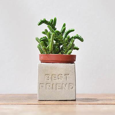 bestfriend多肉磁鐵-正能量組1