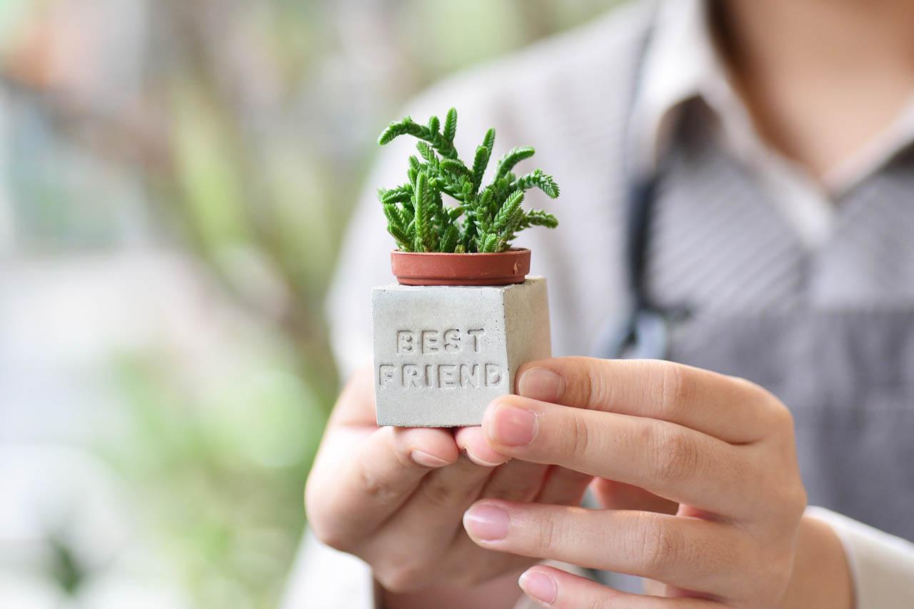 多肉小磁鐵-BEST FRIEND bestfriend多肉磁鐵 正能量組5