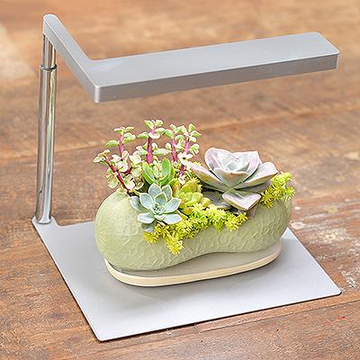 ONF 桌上型多肉植物燈 - 銀色(純燈具) onf銀色植物燈