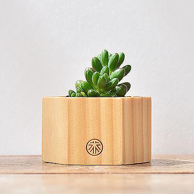 千元以下植物禮物盆栽060 拷貝