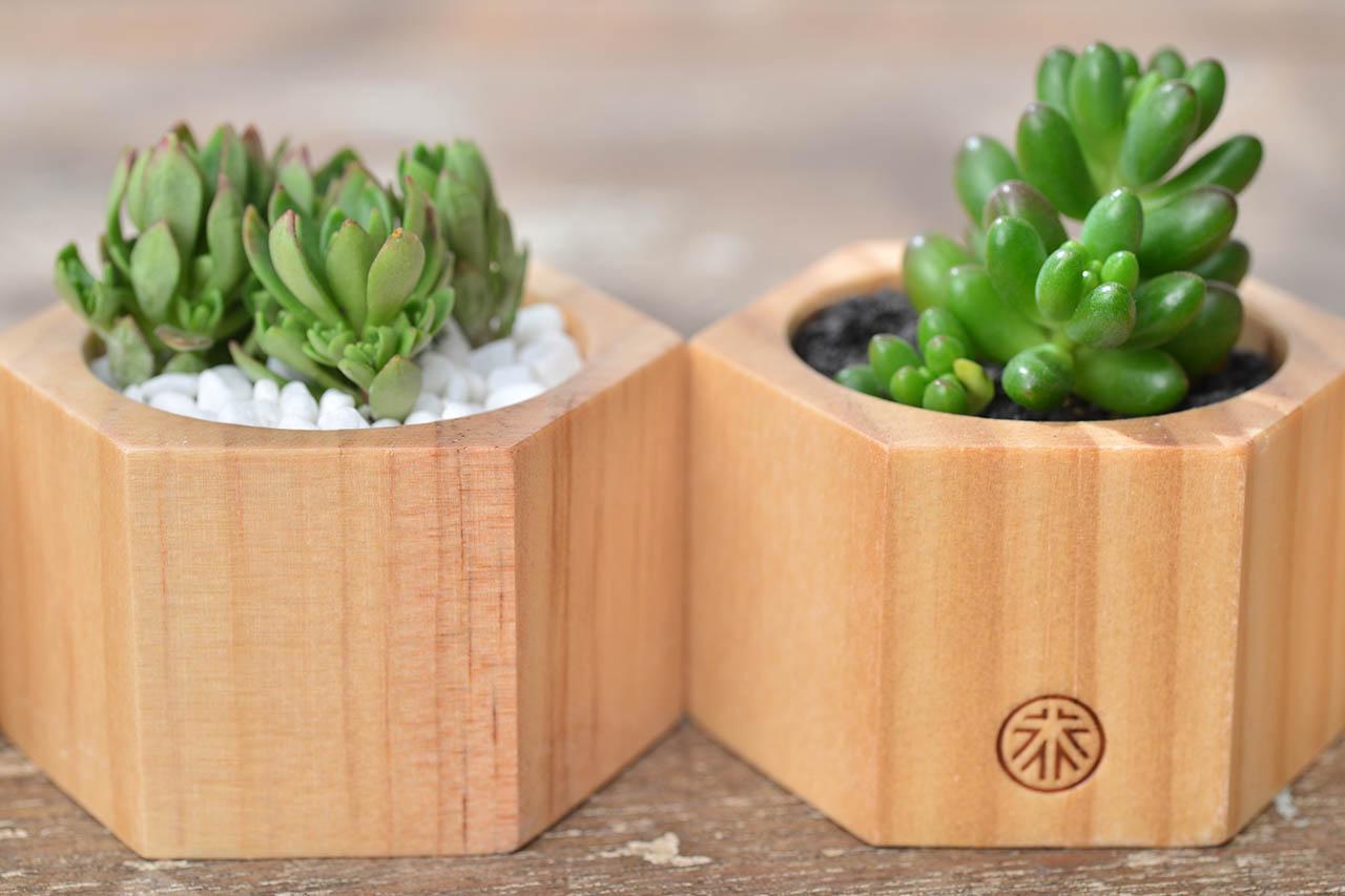多肉小木盒 - 萬年草 079
