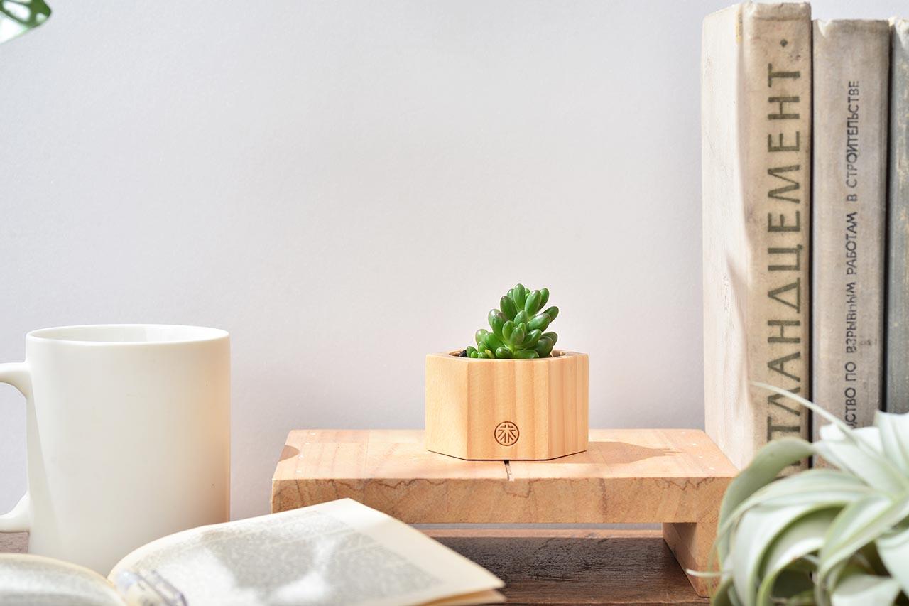 美麗桌上盆栽
