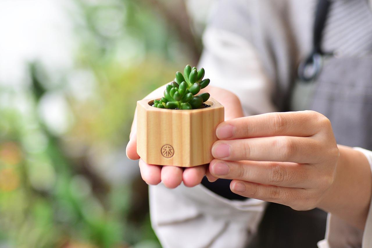 生日小禮物盆栽