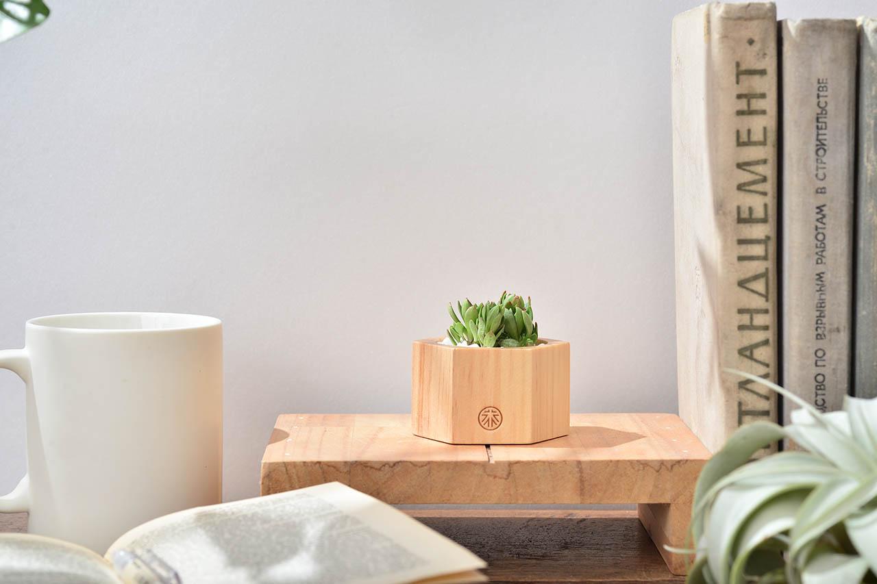 多肉小木盒 - 葉形景天 3