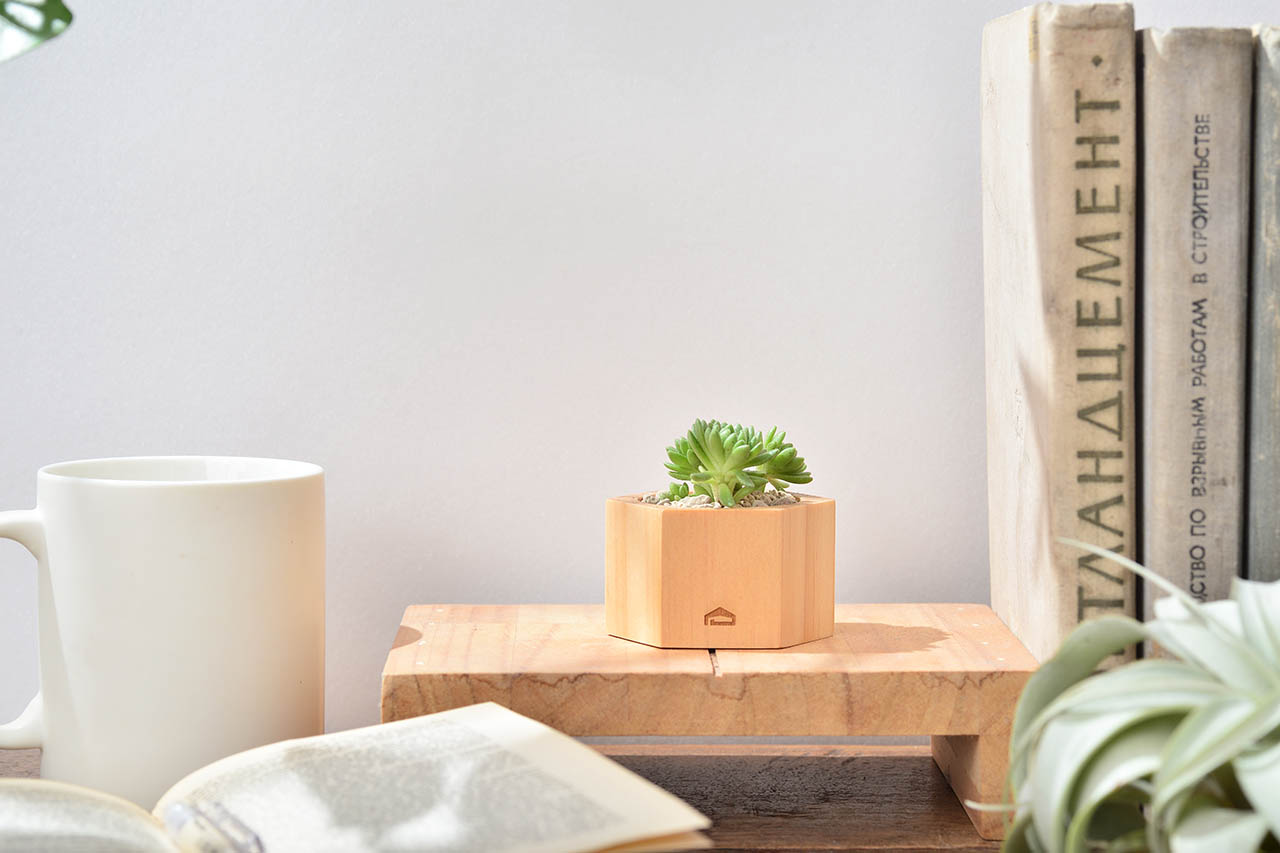 萬年草桌上盆栽