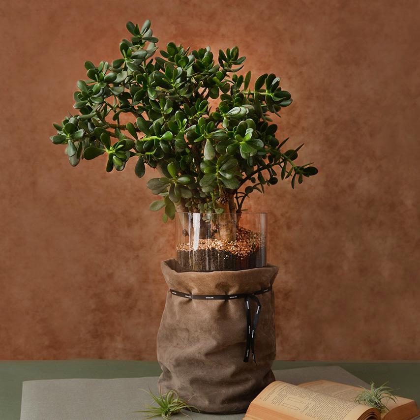 有肉 Succulent & Gift - 官方網站 0324大氣送禮盆栽 800