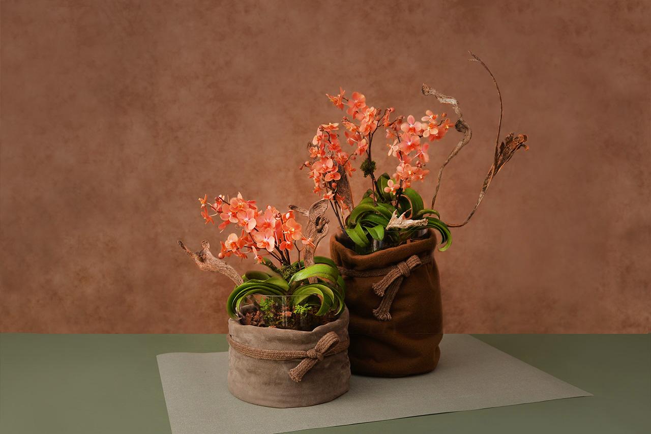 紅色蘭花盆栽