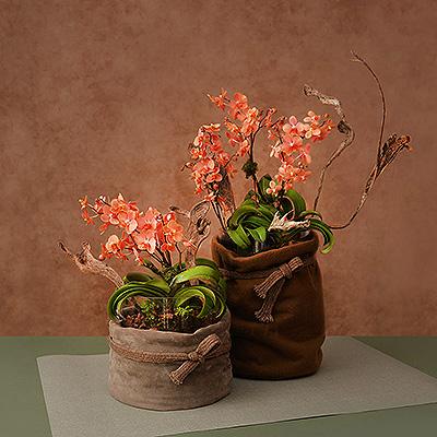 雙盆蘭花組