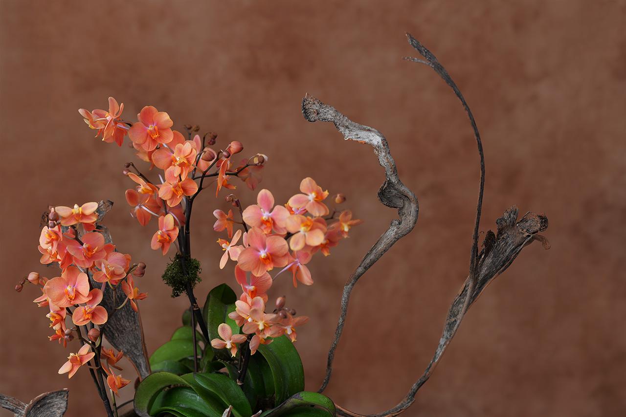 蘭花與姿態感的禮物
