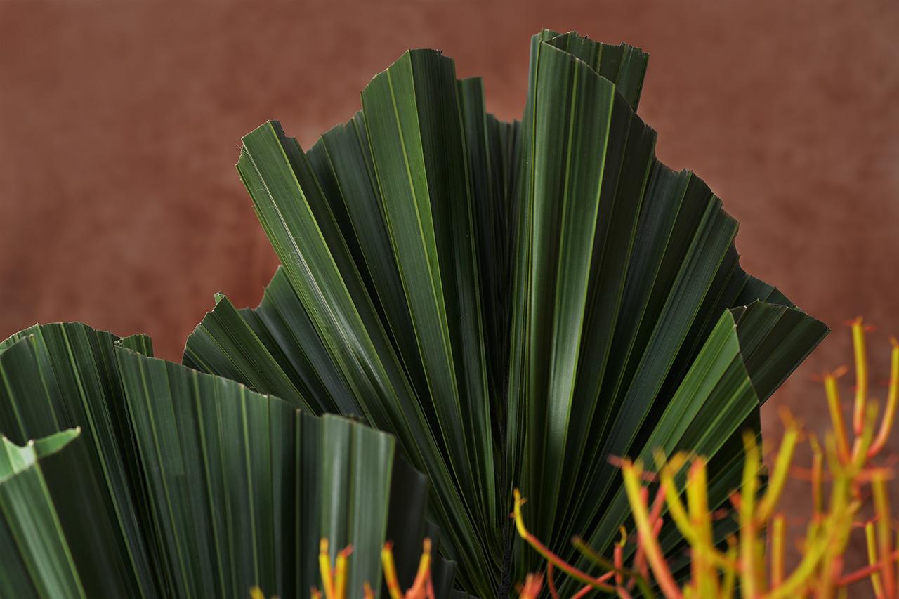 軸櫚盆栽設計