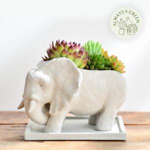 熱帶非洲 - 花現大象 – 花現大象
